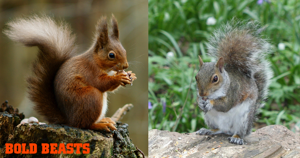 Bols Beasts: Facts about squirrels